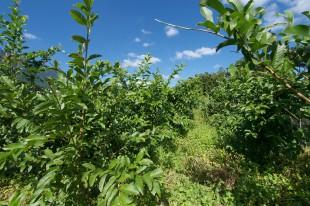 無農薬・無化学肥料で栽培