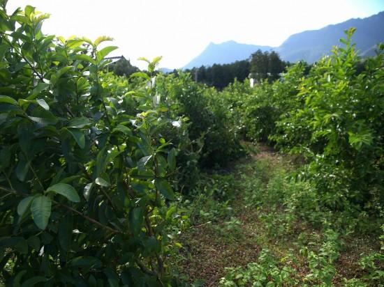 船行農園の風景