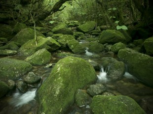 屋久島は植物の楽園